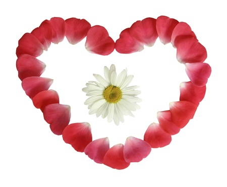 A camomile in heart from red petals on a white background photo