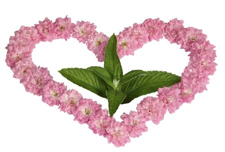 A green sprout in heart from pink roses on a white background Stock Photo - 10000559