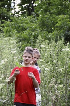 Children  step  a path in a high grass Stock Photo