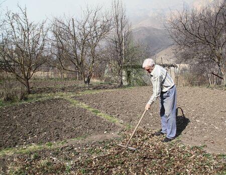 Elderly man cleans rake dry leaves in the garden