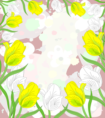 Lovely white and yellow tulips in bloom on an abstract background  photo