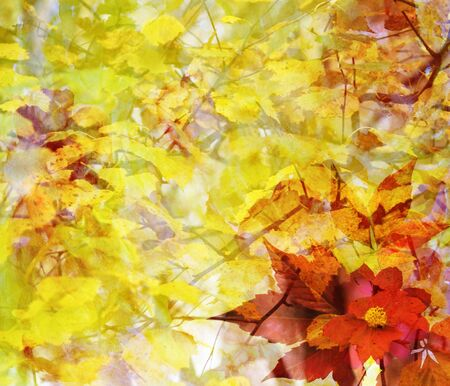 scenic: Abstract autumn illustration with yellow and red leaves, fall scenic backdrop
