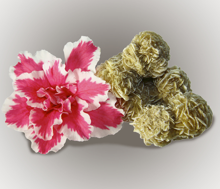 The beautiful pink flower and gypsum rose