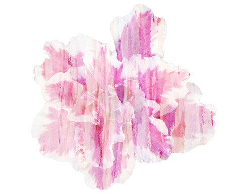 azalea: Beautiful single pink flower Azalea, Watercolor painting
