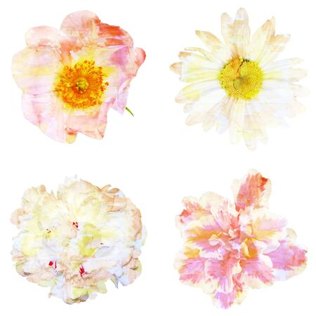 azalea: Watercolor painting with abstract flowers rose hips, chamomile, peony, azalea, isolated on white background Stock Photo