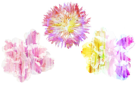Watercolor painting with abstract flowers cornflower and azaleas, isolated on white background