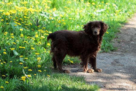 lost dog standing on the road Reklamní fotografie