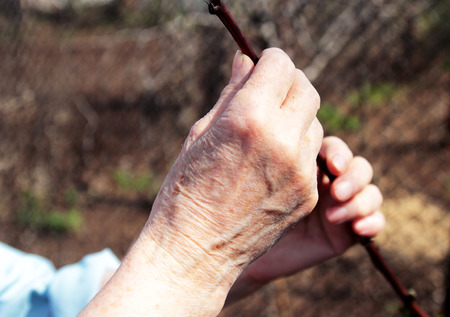 hands of an elderly woman holding a young sprout