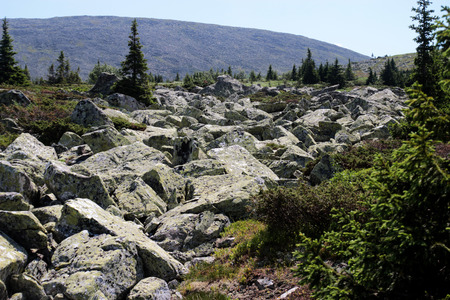 mountain landscape with a river of rocks and firs