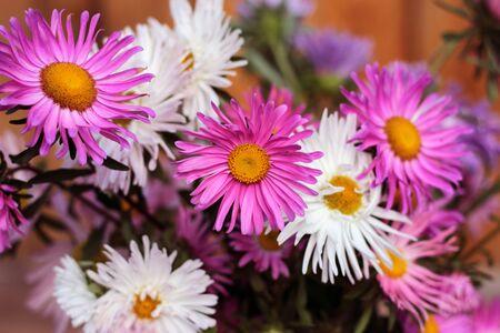 warm floral background with asters Reklamní fotografie