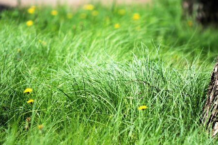 Natural background with a thick green grass
