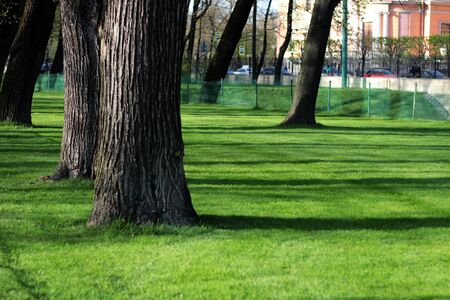 trees and green grass in the park Reklamní fotografie