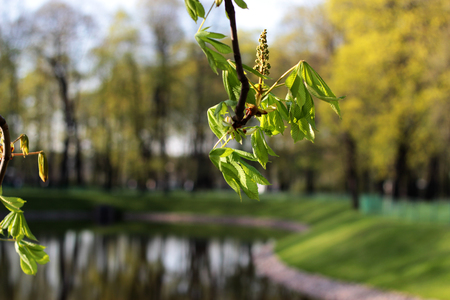 natural spring background with green branch chestnut