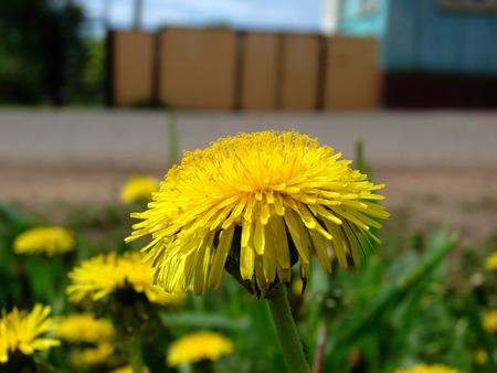 Yellow spring beautiful flowers