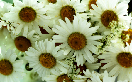 A bouquet of beautiful daisies closeup