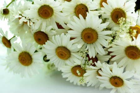 A bouquet of beautiful daisies lies on a white background Reklamní fotografie