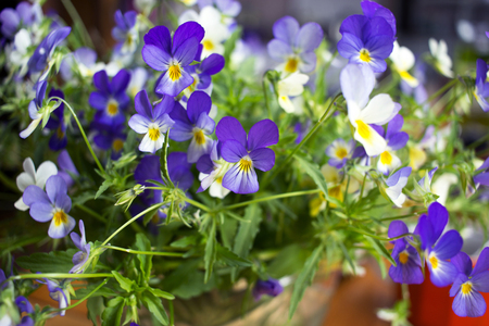 Natural green background with violets