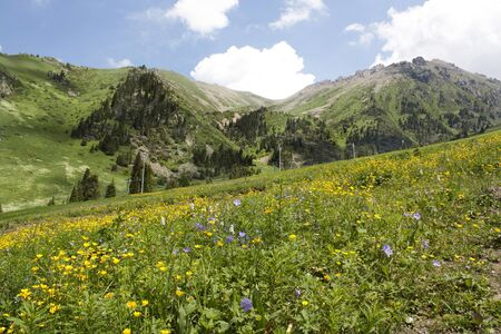 kz: meadow in the mountains