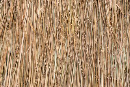thatched: Thatched roof made from the leaves of grass.