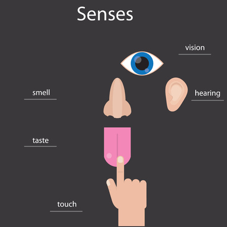 senses: Set of five human senses. Icons of human senses. Infographics about human senses.