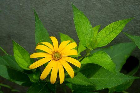 sidewall: flower sidewall
