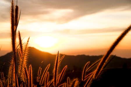 orange sunset: sunset