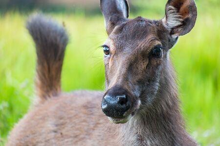 huge antlers: deer