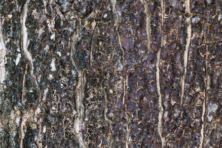 textured: Textured bark