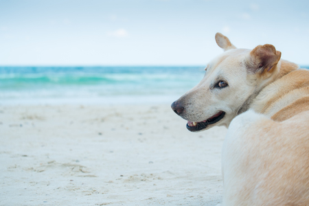 anticipation: The anticipation of a dog on the beach.