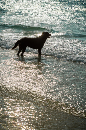 waited: the dog waited for someone on the beach in the island. Stock Photo