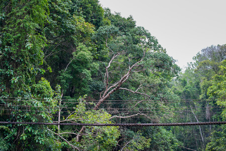 Old suspension bridge to nature in the jungle