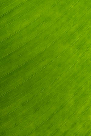 background Green natural color gives a refreshing mood, suitable for use in nature and refreshing graphics.