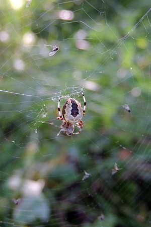 web: Web Stock Photo