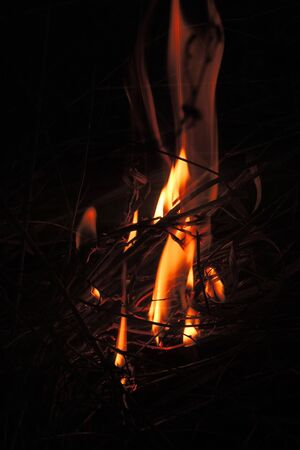 llamas de fuego: Burning wood. The fire. Background. Nature. Fire
