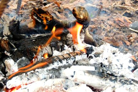 flametongue: Burning wood. The fire. Background. Nature. Fire