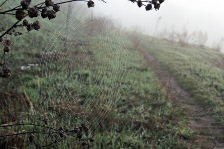 cobwebs: Cobwebs in a field in autumn at sunrise
