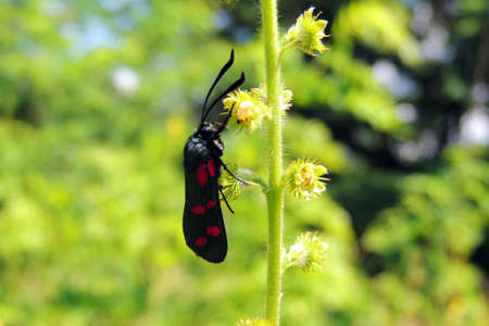 coccinella: Beetle, Beetle on grass red beetle . Stock Photo