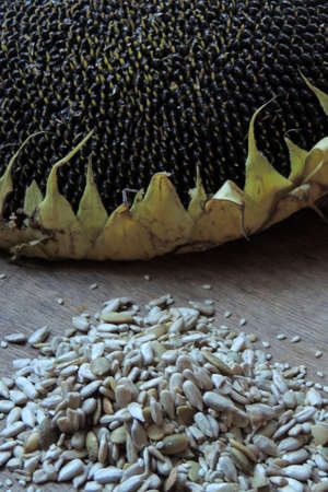 seeds of various: Balls and Various seeds on wooden background.