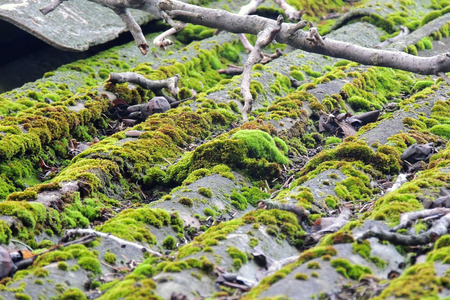 Beautiful moss and lichen covered stone. Bright green moss background. Saturated green abstract pattern. Shallow focus. Filled full frame picture. Moss with autumn wilted brown leaves. Side view. Stock Photo