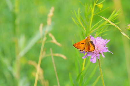 Butterfly on purple flowers in the sunlight Stock Photo