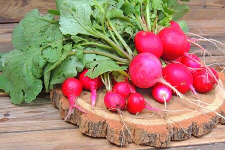 A bunch of freshly picked wet heirloom radishes Easter Egg