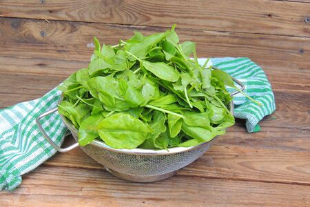 Fresh chopped sorrel and nettles on a plate with a knife on a wooden boards background
