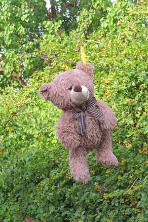 A teddy bear hangs from a clothesline after a washing