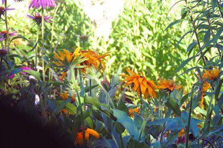 beautiful flowers in the garden bloom in summer