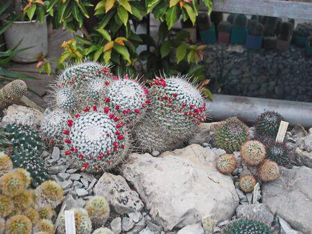 botanika: Cactus o povaze výlet hodně pichlavý botaniky