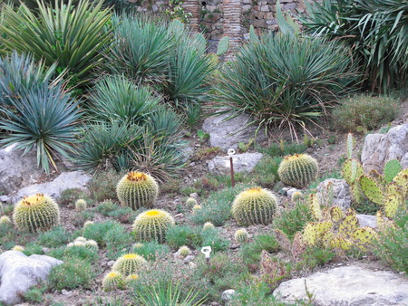 Cactus on nature of trip much prickly botany Stock Photo