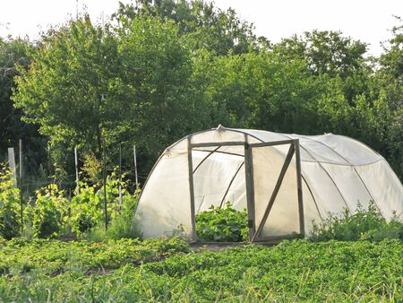 hothouse: large hothouse for growing of vegetables in a garden Stock Photo