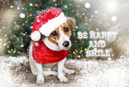 A small dog dressed in a Santa Claus suit sitting near the Christmas tree under the falling snow and looking into the camera. Merry Christmas and Happy New Year card. Be happy and smile Stock Photo
