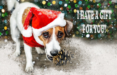 Portreit of a small adorable dog in red Santa Claus costume holding a pine cone in mouth under falling snow and looking into camera. Merry Christmas and Happy New Year card. I have a gift for you Reklamní fotografie