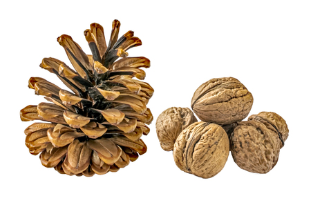 Pine cone and Persian walnuts isolated on a white background. A mature female pine cone and Slide of the six nuts